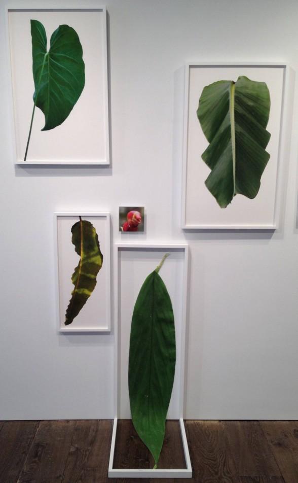 Prints of leaves