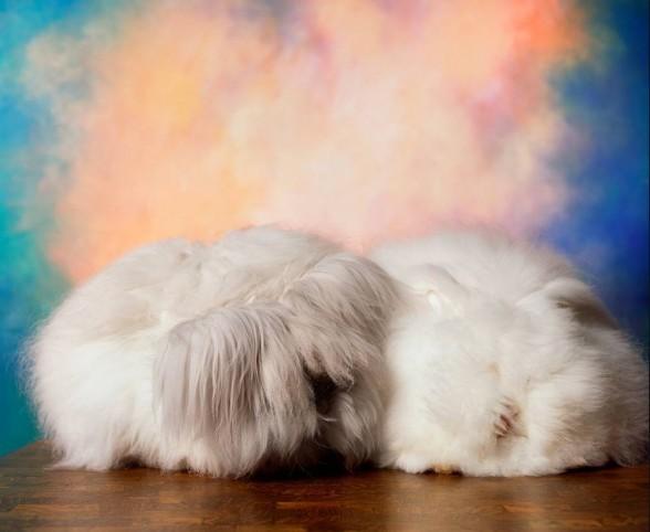 rabbit_reader_advisory