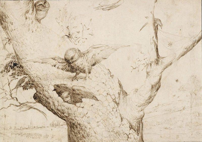 "Hieronymus Bosch ""The Owl's Nest"" pen and ink, Museum Boijmans Van Beuningen, Rotterdam."