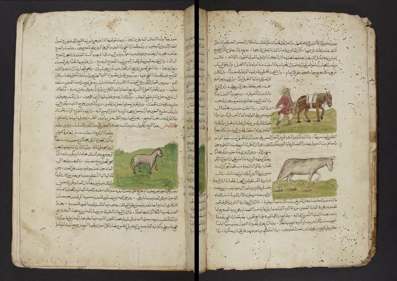 Penn Museum Zoology Manuscript