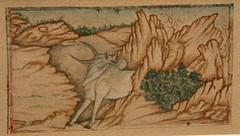 Taurus: A Wild Bull