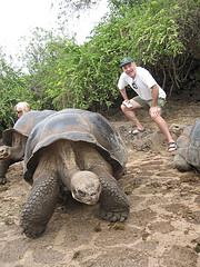 murray and tortoise