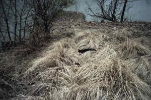 Ed Panar. Along the Monongahela River 2005 copyright Ed Panar