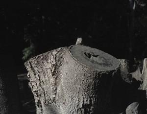 Ed Panar. Big Sur 2005 Copyright Ed Panar