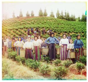 Sergei Mikhailovich Prokudin-Gorskii 'Group of Workers harvesting tea near Chakva, between 1905-1915.